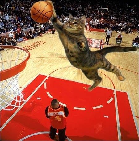 Смешные моменты в баскетболе (ВИДЕО)