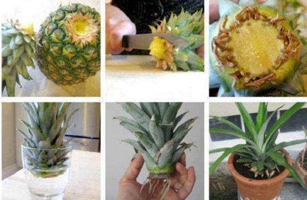 15 овочів, які без проблем можна виростити на підвіконні (Фото)