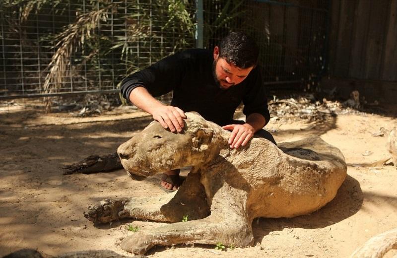 Трагедия в зоопарке Хан-Юнис: Когда охранники вернулись, то увидели страшную картину (фото 18+)