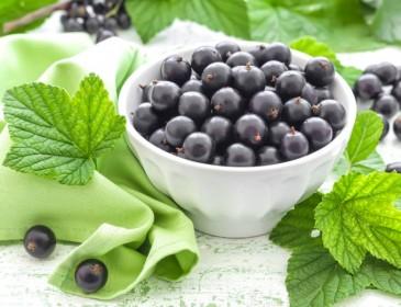 Смородинова дієта допоможе позбутись 4 кілограмів за 4 дні