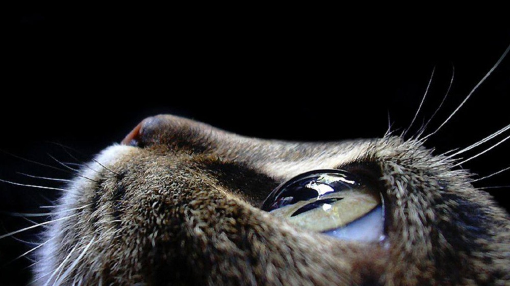 11519360-animals-pictures-cat-eyes-macro-photography-1000-735c0479a7-1475490796