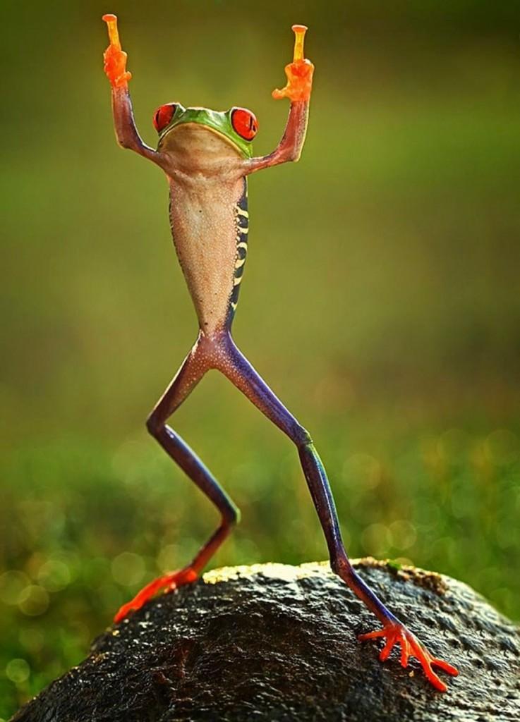 11523210-0ashikhei-goh-of-indonesia-frog-flipping-the-double-bird-not-photoshopped-771676-1000-8358b5af44-1475490796