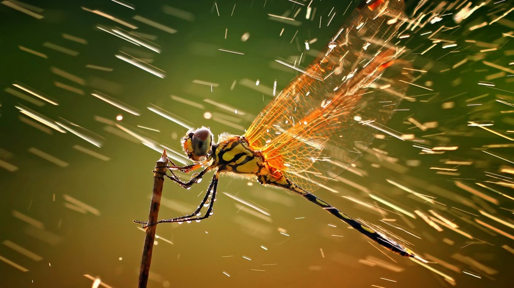 11529510-macro-ventube-com-dragonfly-and-water-1173560-1000-8358b5af44-1475490796