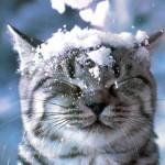 Як це вперше в житті побачити сніг?