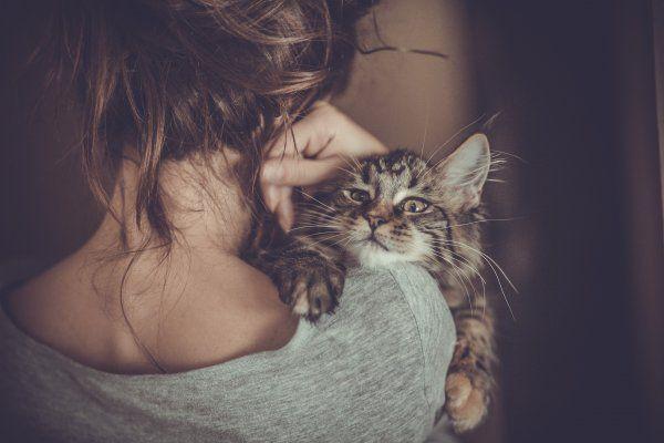 Будьте пильні! Кішки провокують ПМС у жінок